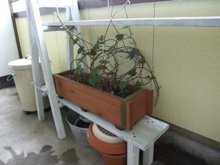 朝顔2鉢は、棚が飛ばないよう重石代わり。すまん。