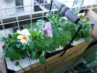 水耕花かご。ちょっとずつ育ってます。