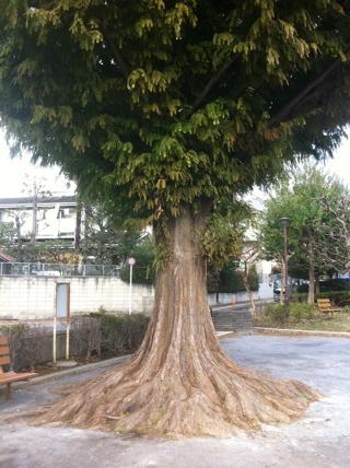 休憩した公園の木。